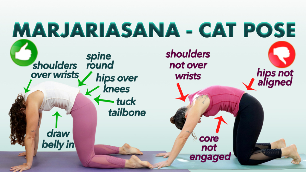cat pose in yoga